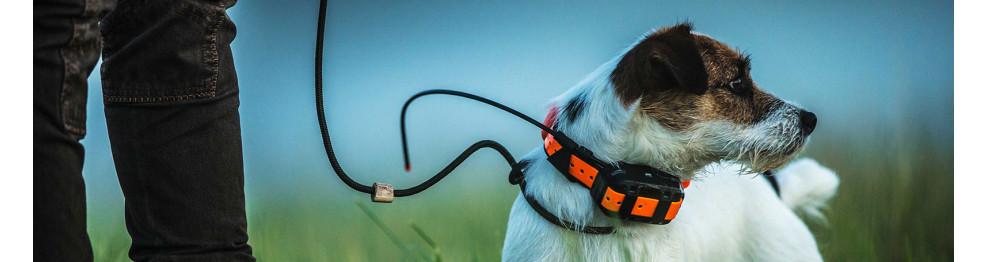 Hundeortung & Tracking